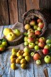 Manzanas salvajes y peras en cesta Fotografía de archivo