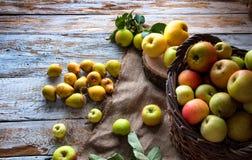 Manzanas salvajes y peras en cesta Fotos de archivo