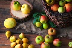 Manzanas salvajes y peras en cesta Imágenes de archivo libres de regalías