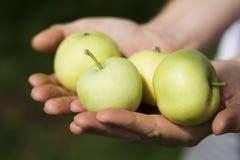 Manzanas verdes Imagen de archivo libre de regalías