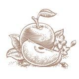 Manzanas verdes con las hojas y las flores Imagen de archivo libre de regalías