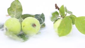 Manzanas verdes jugosas maduras almacen de video