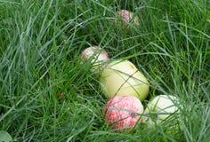 Manzanas verdes rojas Fotos de archivo libres de regalías