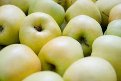 Manzanas verdes y amarillas Manzanas de la variedad de oro Imagen de archivo