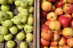 Manzanas verdes y naranja-rojas Imagen de archivo