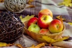 Manzanas y bolas de la paja en la tela escocesa a cuadros Imagen de archivo