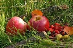 Manzanas y briers rojos foto de archivo libre de regalías