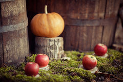 Manzanas y calabaza en musgo verde fotografía de archivo libre de regalías