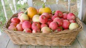 Manzanas y calabazas Imagen de archivo