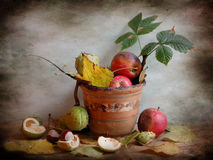 Manzanas y castañas putrefactas Fotos de archivo libres de regalías
