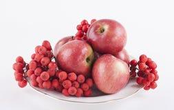 Manzanas y ceniza de montaña en una placa blanca Fotografía de archivo