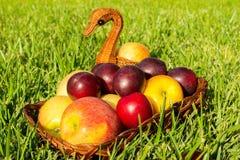 Manzanas y ciruelos Fotografía de archivo