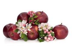 Manzanas y flor de la flor Fotos de archivo libres de regalías
