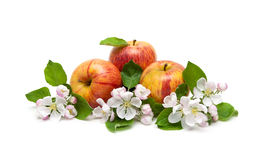 Manzanas y flores del Apple-árbol aisladas en el fondo blanco Imagenes de archivo