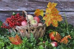 Manzanas y hojas del amarillo Imágenes de archivo libres de regalías
