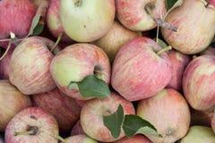 Manzanas y hojas rojas horizontales Fotos de archivo libres de regalías