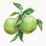 Manzanas verdes ilustración del vector
