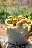 Manzanas y uvas en un cubo en el jardín imagenes de archivo