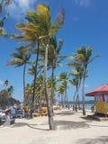 Manzanilla Bay Palm trees stock photography