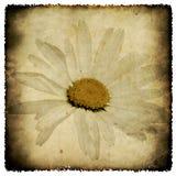 Manzanilla de Grunge Foto de archivo libre de regalías
