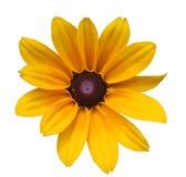 Manzanilla en blanco Imagen de archivo libre de regalías