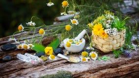 Manzanilla, plantas medicinales, homeopatía Fotos de archivo