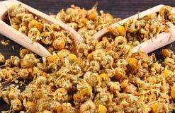 Manzanilla secada en la tabla de madera, medicina alternativa Imagenes de archivo
