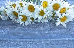 Manzanillas en el fondo de los viejos tableros de madera azules imagen de archivo