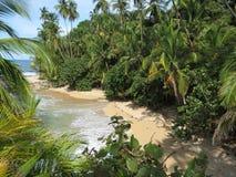Manzanillo strand royaltyfria foton