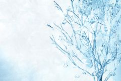 Wintry branches, organza & crystal drops Stock Image