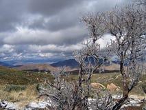 Manzanita helado con la opinión del desierto Imagen de archivo libre de regalías