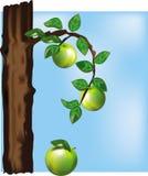 Manzano Imagen de archivo libre de regalías