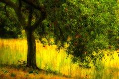 Manzano Imagen de archivo