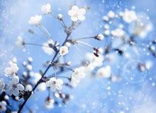 Manzano Con las flores Foto de archivo