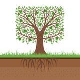 Manzano con las manzanas y las raíces verdes Corte del suelo El cultivar un huerto concentrado ilustración del vector