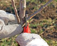 Manzano de la poda foto de archivo libre de regalías