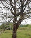 Manzano de madera imagen de archivo