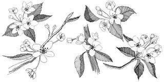 Manzano en un estilo del vector aislado Foto de archivo