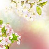 Manzano floreciente contra el cielo EPS 10 Fotografía de archivo