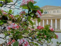 Manzano floreciente en resorte foto de archivo libre de regalías