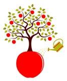 Manzano que crece de manzana Imagenes de archivo
