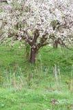 Manzanos florecidos Naturaleza en Tekeli foto de archivo libre de regalías