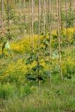 Manzanos recientemente plantados en huerta Foto de archivo libre de regalías