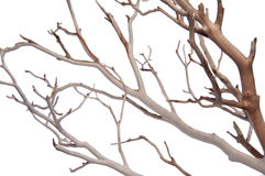 Manzantia Decorative Branches Royalty Free Stock Photography
