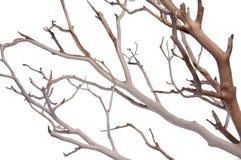 Manzantia Decorative Branches Royalty Free Stock Photography