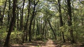 Manziana Forest Italy almacen de metraje de vídeo