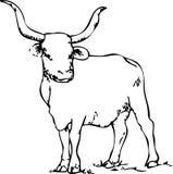 Manzo della mucca texana Immagini Stock Libere da Diritti