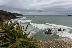 Maori bay overview Royalty Free Stock Images