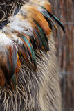 Maori cloak. Close-up of feathers on a Maori cloak - NZ travel image stock image
