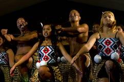 Maori Cultural Show Fotografie Stock Libere da Diritti